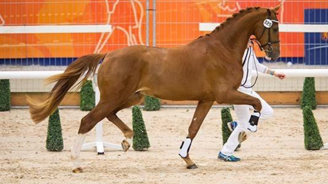 paard in training zetten